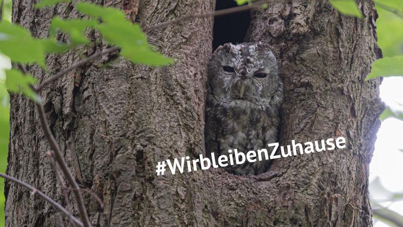Waldkauz bleibt Zuhause